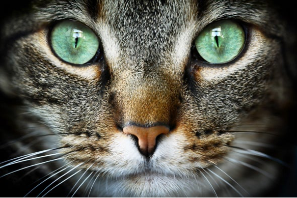 Answers to The Question: Why do Cats Purr?