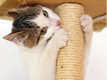 Choosing the Best Cat Tree for Yourself and Your Cat…