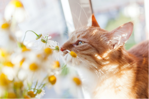 Let's Talk Felines & Flowers…While Weather Permits!