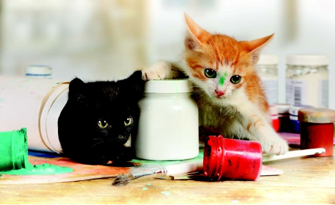 Why Do Cats Knock Stuff Over?