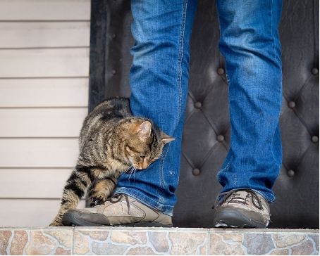 Why Your Cat Rubs Up Against You…