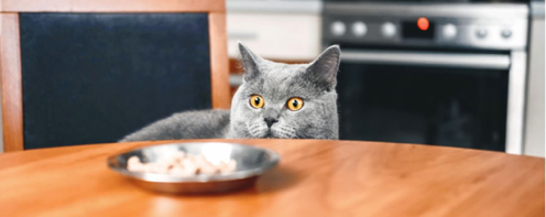 Good Food, Bad Food! A Guide to What Kitty Should and Should Not be Eating.