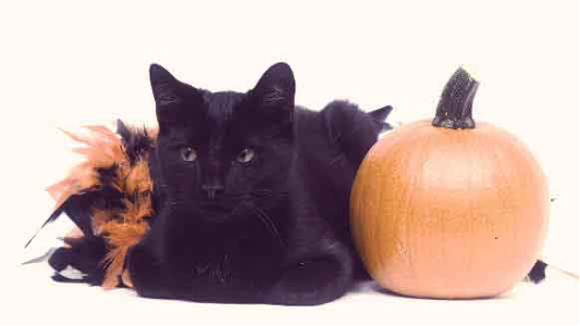 Spooky Myths Surrounding Halloween and Cats…