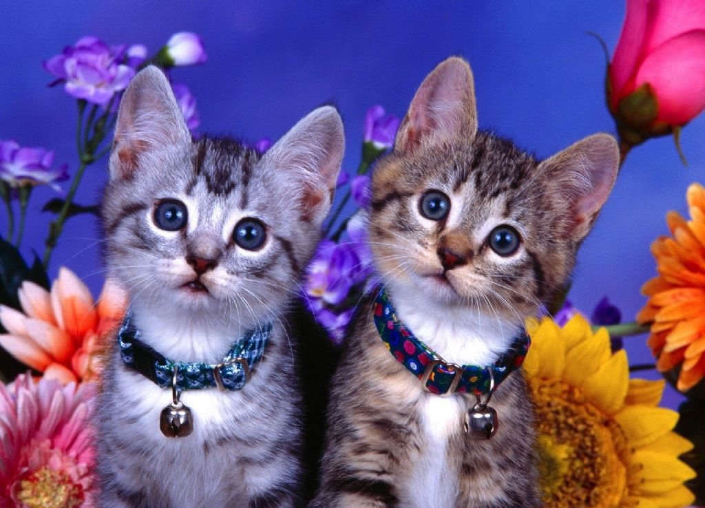 Happy Cats-giving! Thanksgiving Foods that are Safe for Most Cats & Kittens