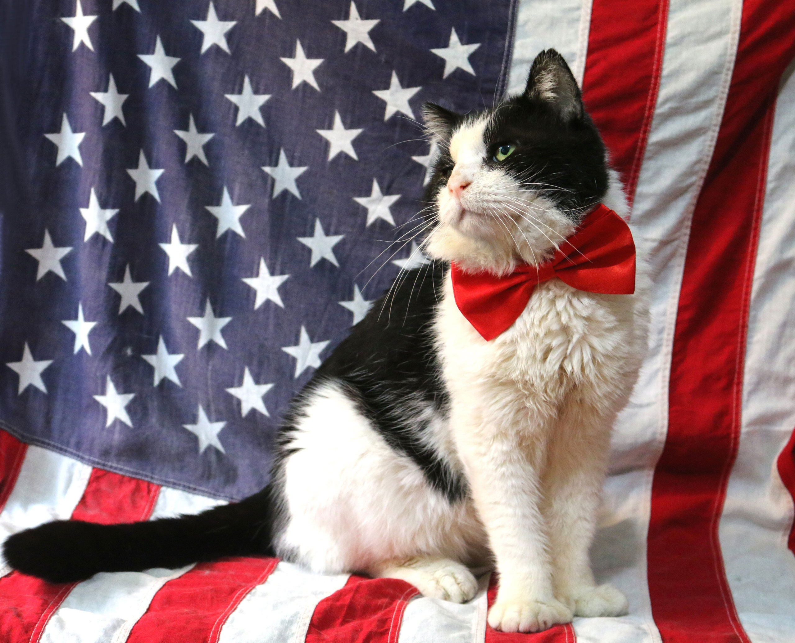 First Felines: White House Cats & their Presidents