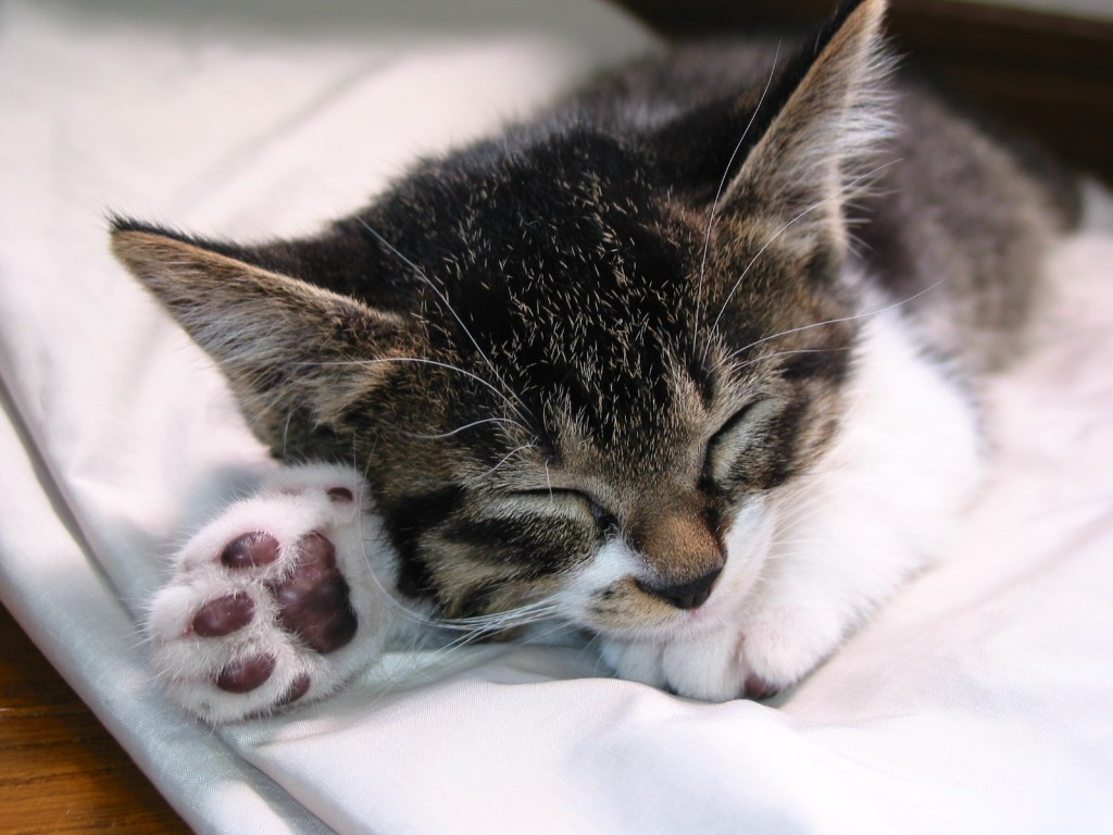 What is Normal Cat Sleep Behavior?