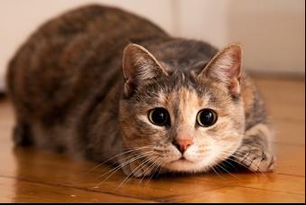 Crazy, Weird Cat Behaviors