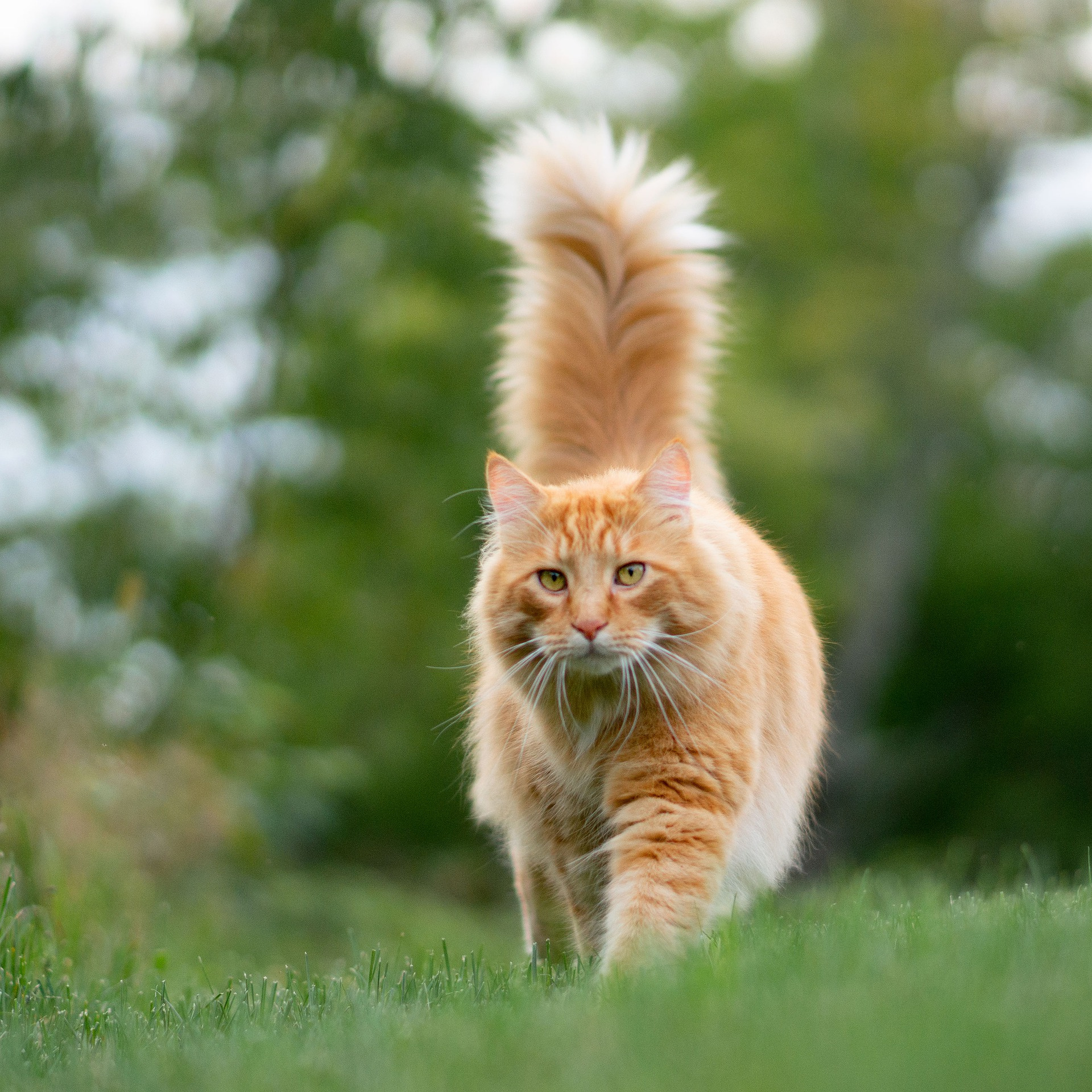 Telling Tails: Cat Language as Expressed by their Tails!