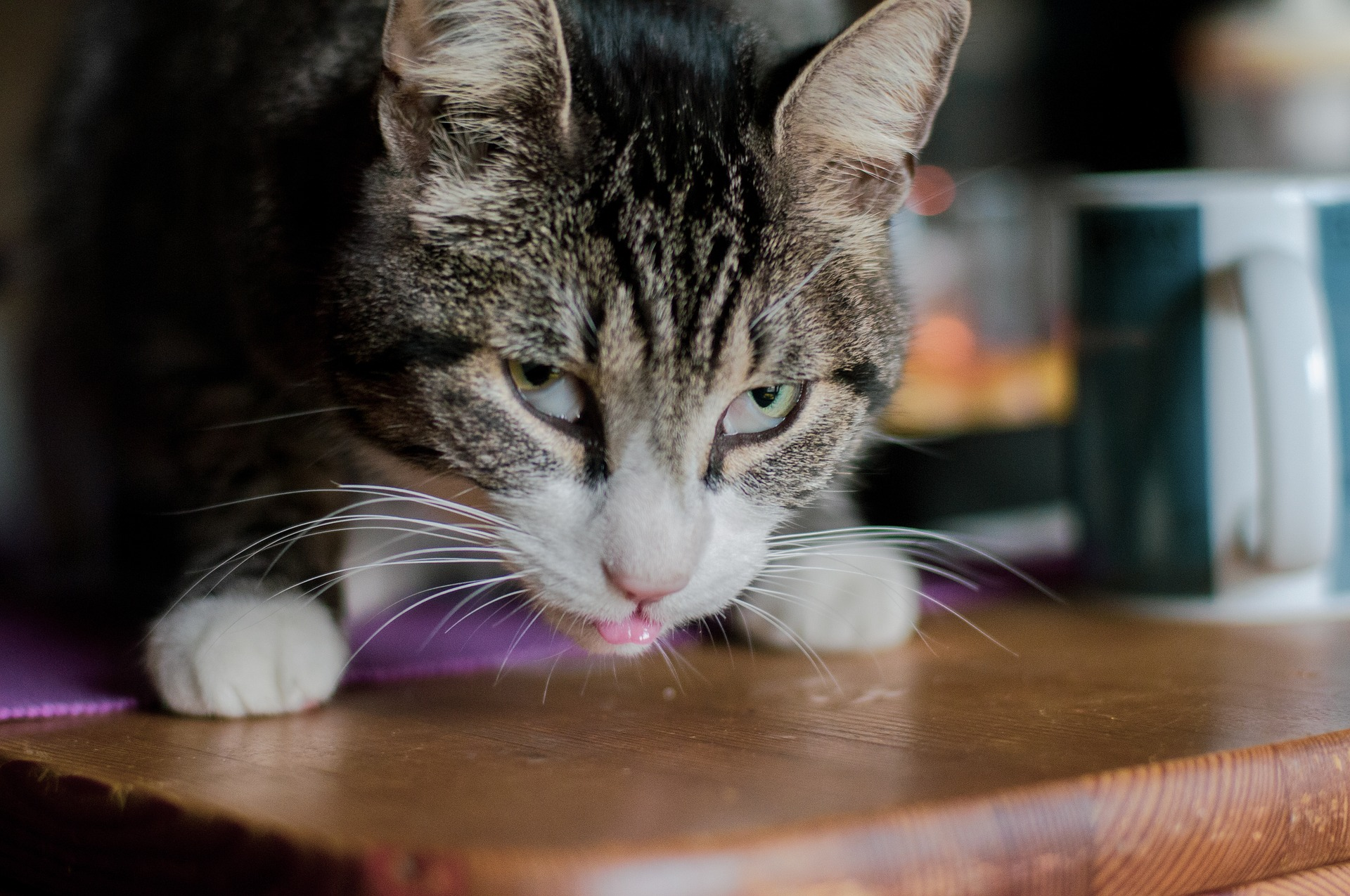 How to Keep Cats Away from Poison…