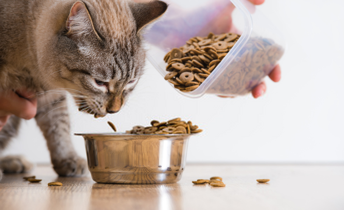 How Often Should You Feed Your Cat