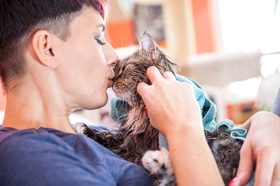 Why Cats Rub Their Faces Against You…