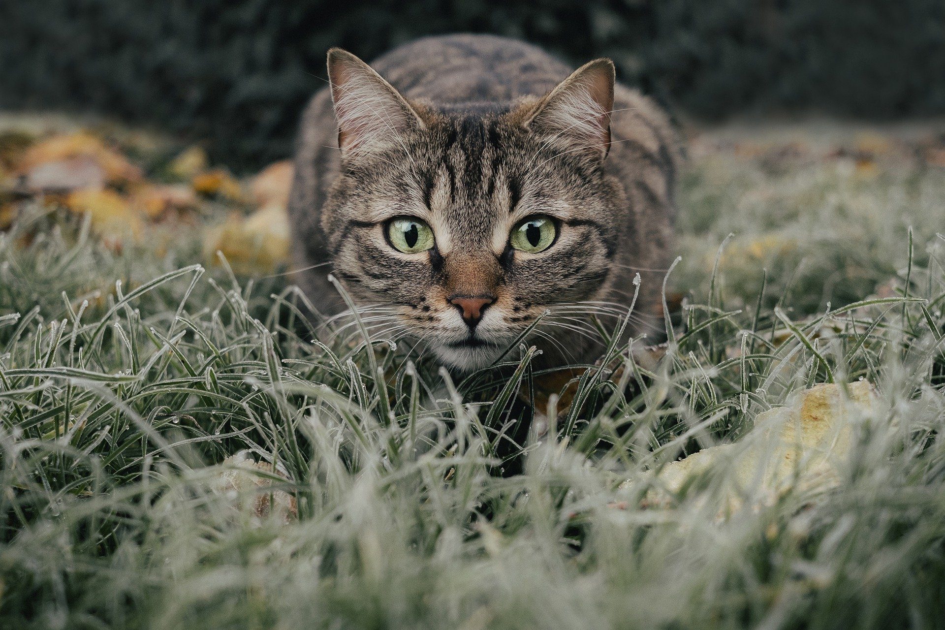 What Kind of Tabby Cat Do You Have?