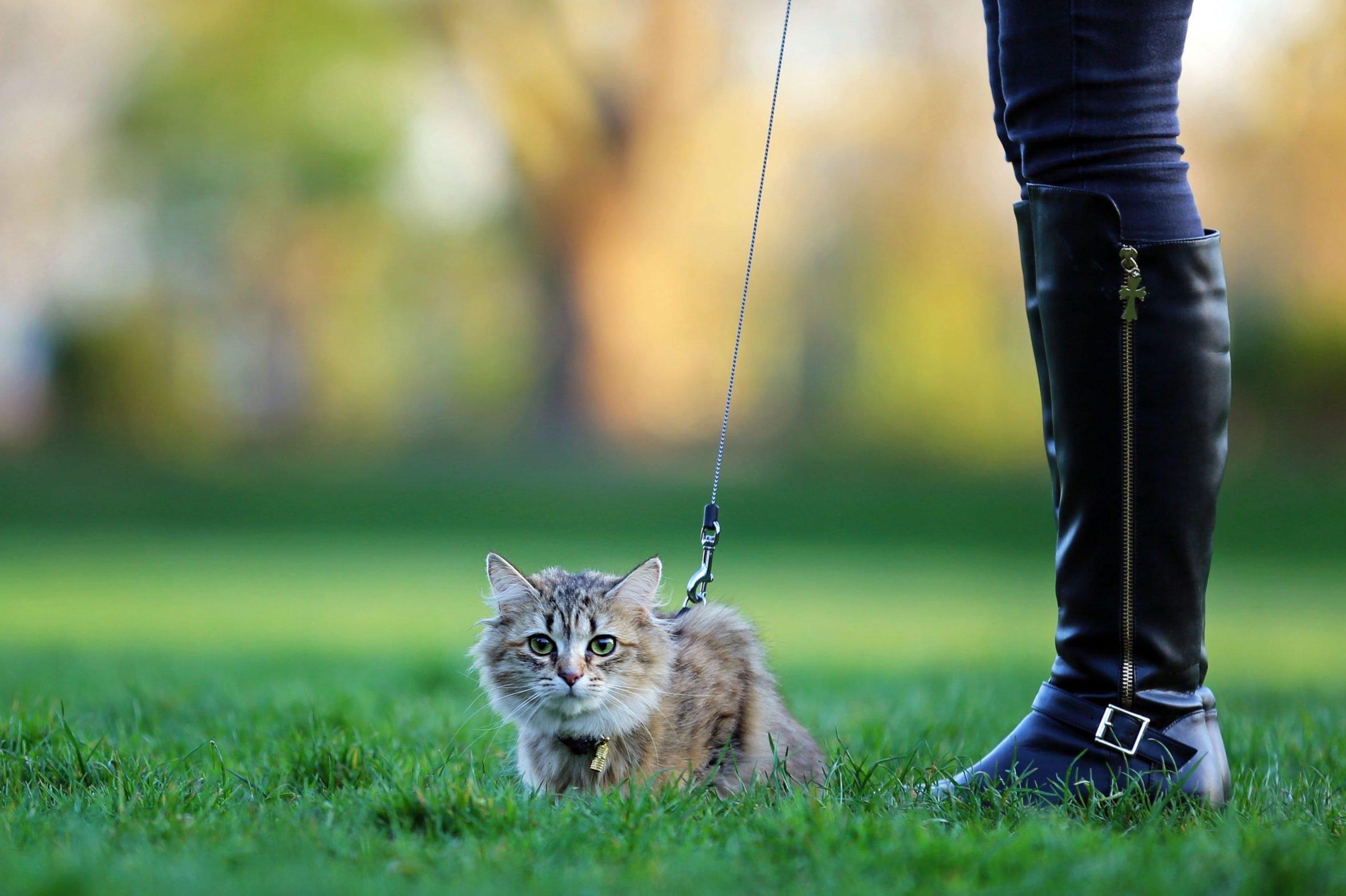 How Best to Discipline Your Feline… if Needed!