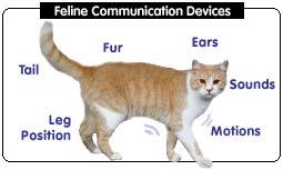 Cat Communication Devices