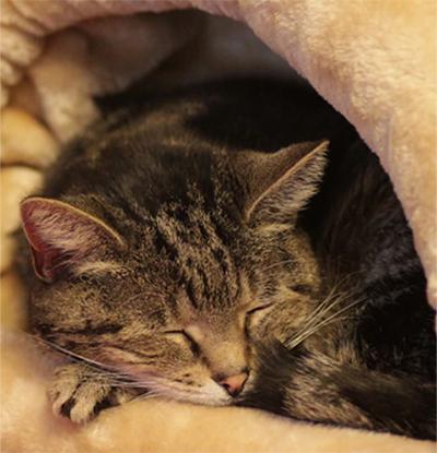 cat testimonial image