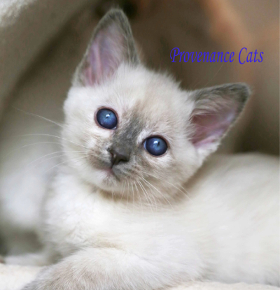 provenance cat photo