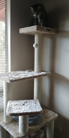 cat tree photo