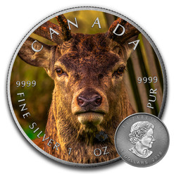 DEER - CANADIAN WILDLIFE SERIES - 2016 1 oz Pure Silver Coin - Color & Antique Finish
