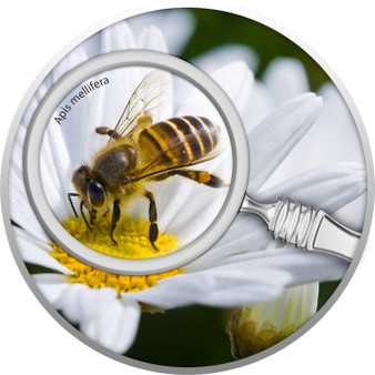HONEY BEE The Secret Garden Silver Coin 500 Francs Cameroon 2020