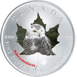 1 oz Maple Leaf Snowy Owl Theme ~ Silver .9999 $5 Canada 2015