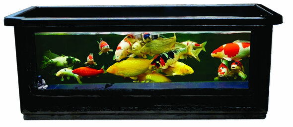 WINDOW Pond 1800 - BUNDLE 1