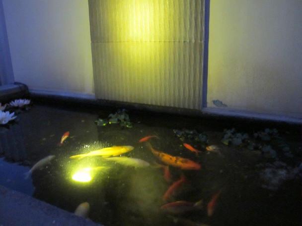 LED 3W WARM WHITE Pond Light - Includes LV Transformer