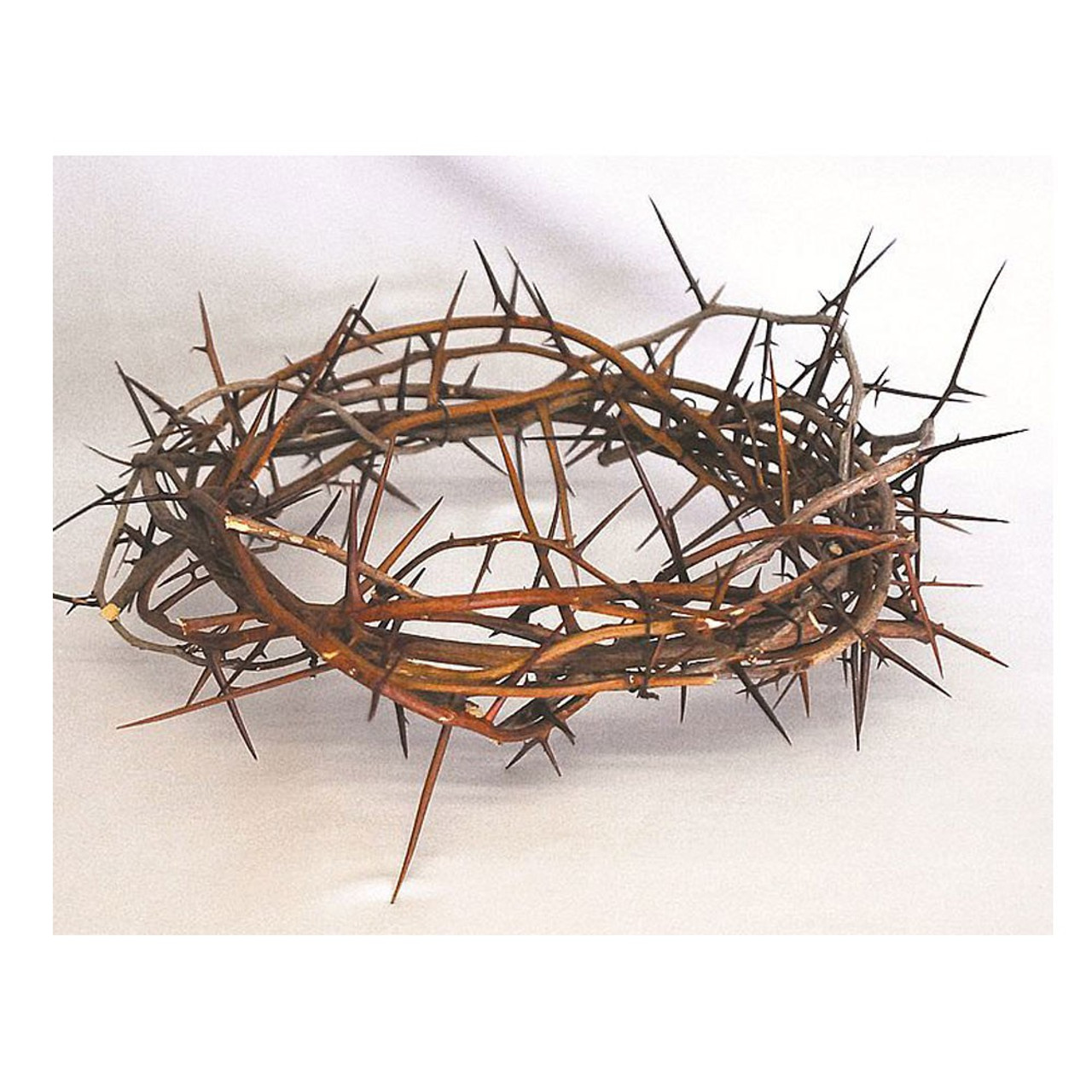 Crown of Thorns 13 inch