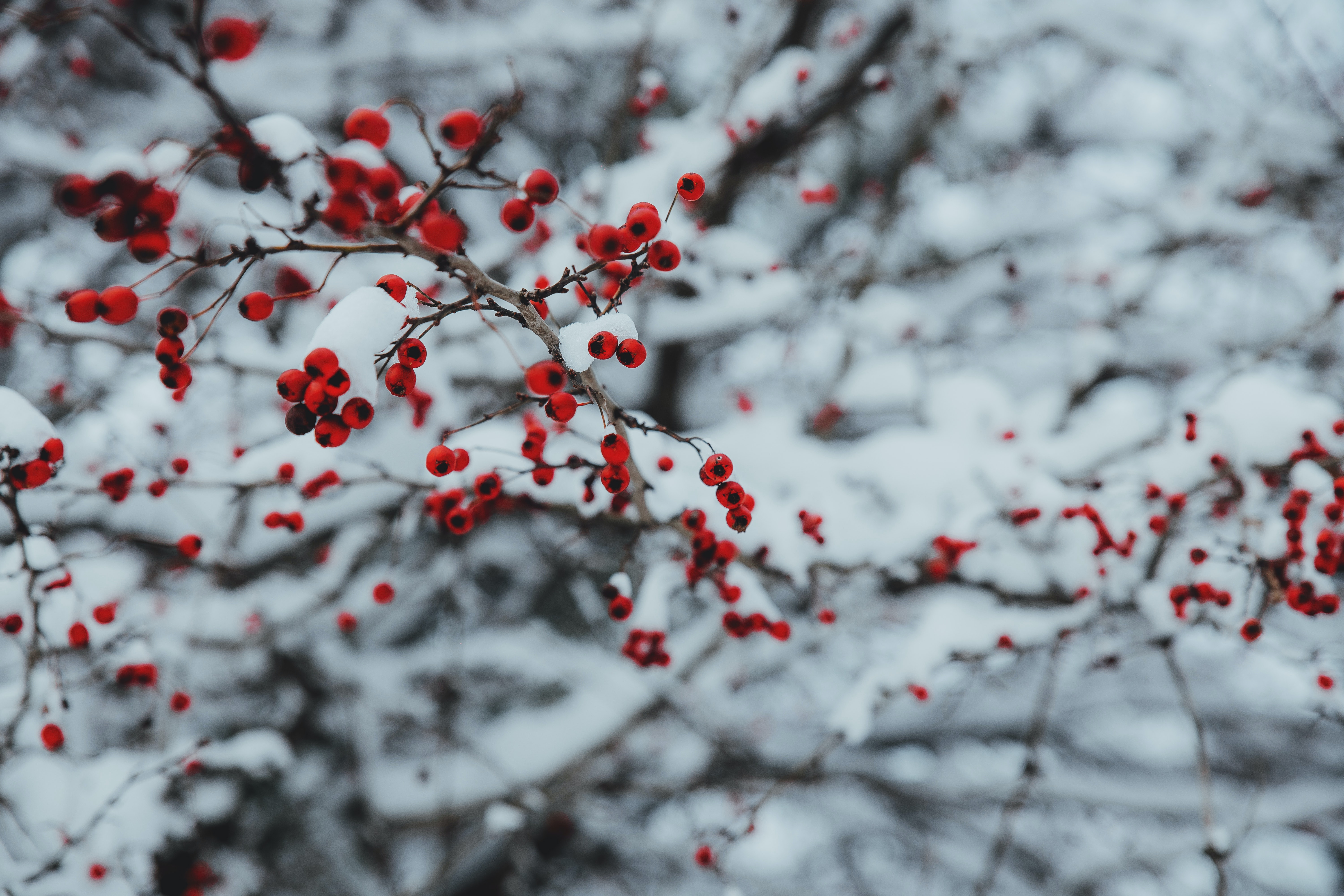 Outdoor Christmas Traditions