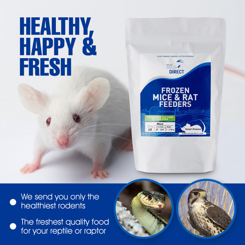 Large Adult Mice  Frozen feeder large adult mice are good for newly hatched  corn snake, boas, ball python, king snake, carnivorous lizards, monitors, red tail boas, milk snakes, rat snakes, birds of prey, bearded dragons,  amphibians and other predators.