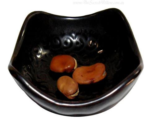 Mojo Wish Beans (Vicia Faba)