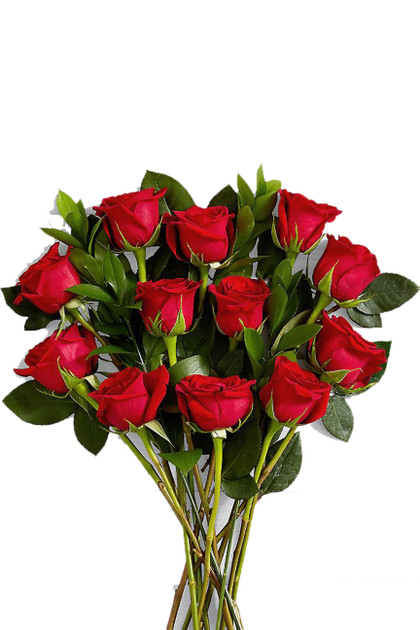 36 Red Roses 3 Dozen Bouquet Vintage Blooms by Lucky Doll®
