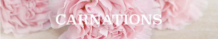 carnations2.jpg