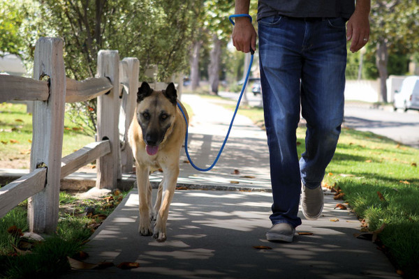 Love2Pet No Pull Leash - Love your walks again