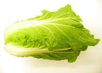 Wong Bok (Chinese Cabbage)