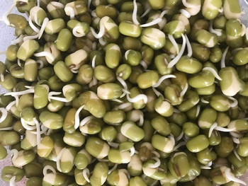 Sprouted Mung Beans - 200gm Punnet