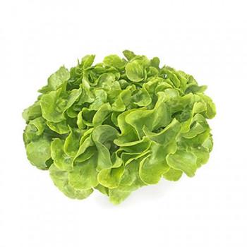 Lettuce - Hydroponic Each (Green)