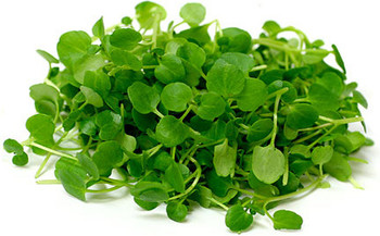 Midi Watercress - 250gm Bag