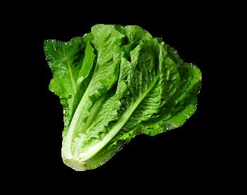 Lettuce - Large Cos Each