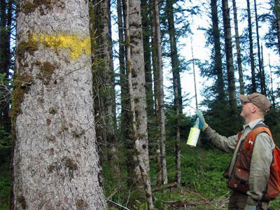 Forestry Paint Marking