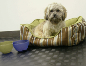 Dog in his bed near food and water bowls on Diamond Grip rubber Floor