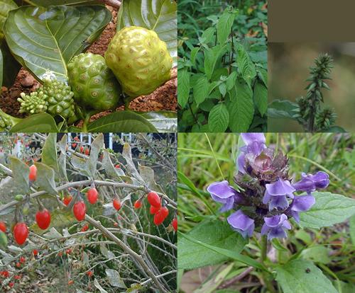 Cardio Well Herbs