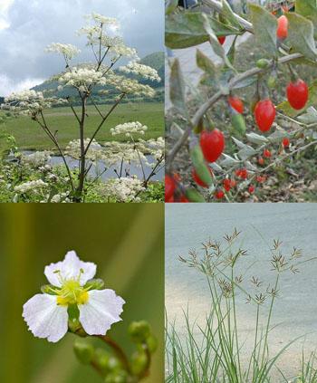Female Well Herbs