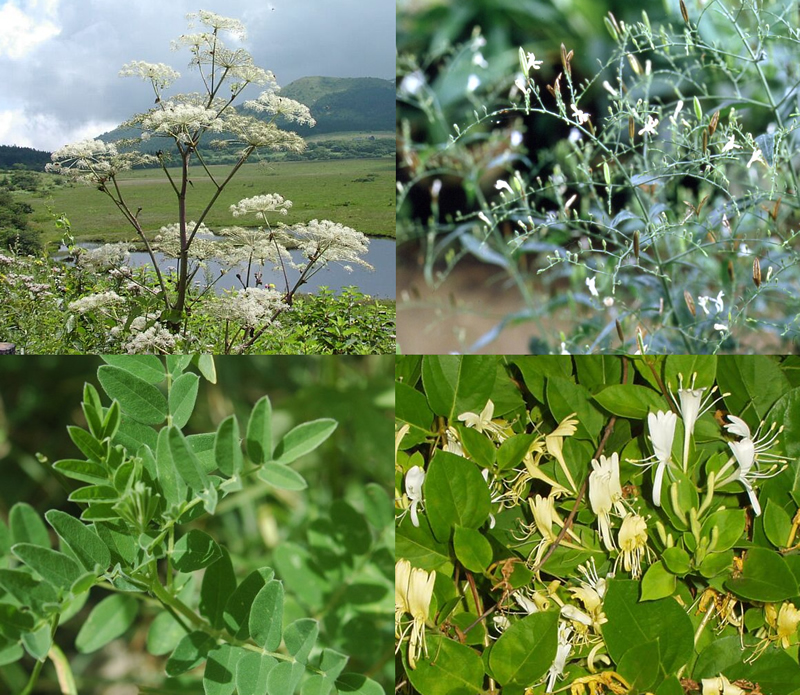 Not So Well 1 Herbal Supplement Herbs