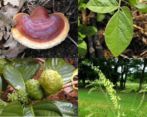 Phytocort Herbs