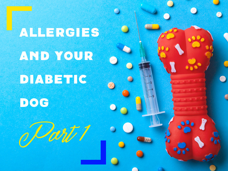 Allergies and Your Diabetic Dog: Part 1
