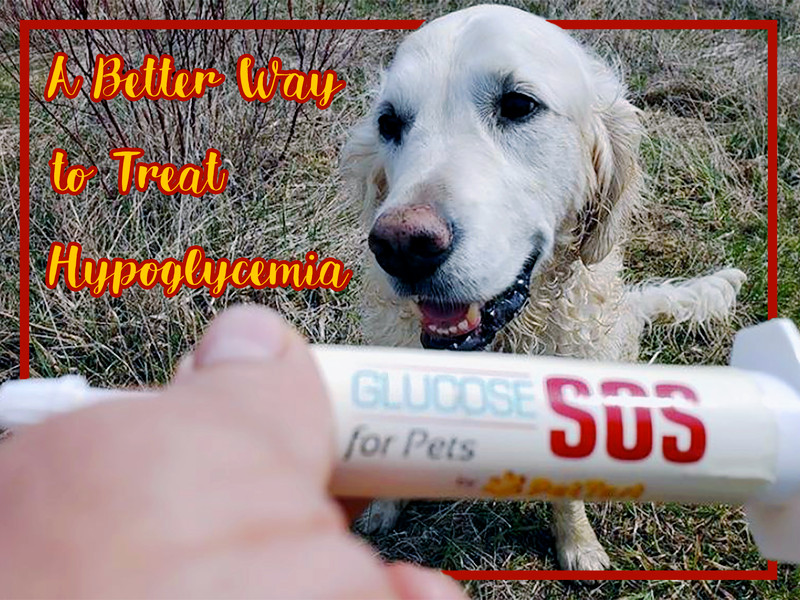 A Better Way to Treat Hypoglycemia in Your Diabetic Dog