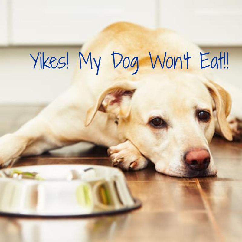 YIKES! My Diabetic Dog Won't Eat!
