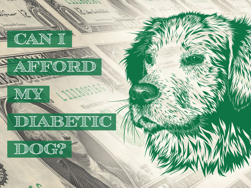 Can I Afford My Diabetic Dog?