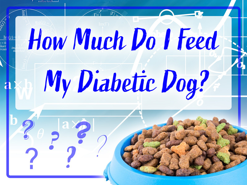 How Much Do I Feed My Diabetic Dog?