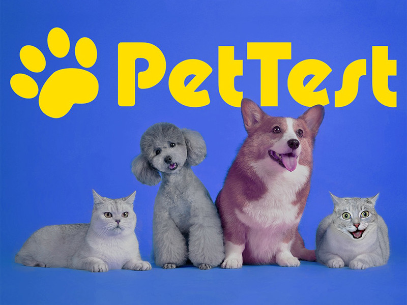 Why you should choose PetTest for your diabetic dog or cat